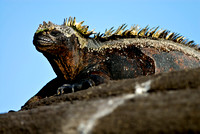 Galapagos Islands Photography New