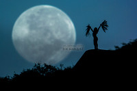 _DSC2101 supermoon joe marquez the smoking camera nikon v3 600mm f4 hawaii silhouette