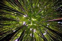 The Bamboo Forest in Maui