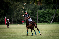 Horse Polo with Nikon 200-500mm Lens and d500  _D5B8842