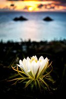 Dream Art Series: Lanikai Sunrise with Flower
